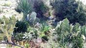 Ayia Napa Cactus Park