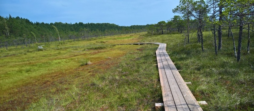 Riisa Swamp Study Trail