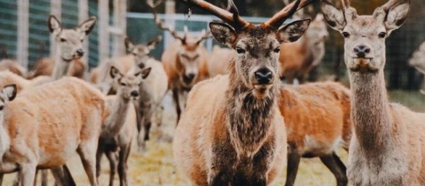 "Deer garden ""Mežsētas"""