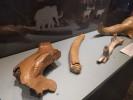 Ancient animal bones